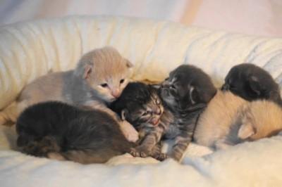 Cats-kullen 1 vecka