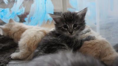 Miss M 5 veckor gammal